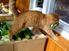 I have changed my diet!  I am choosing   greens!