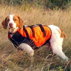 Sylmar protective gear for dogs