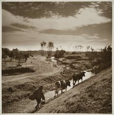 Cenas da Vida Rural. Alentejo, década de 40.
