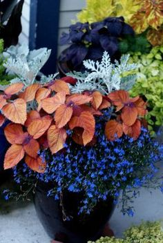 Container gardening flowers - Nice container full of coleus and dusty miller by Cherry Ong Container Flowers, Flower Planters, Container Plants, Garden Planters, Container Gardening, Flower Pots, Planters Shade, Gardening Vegetables, Fall Planters