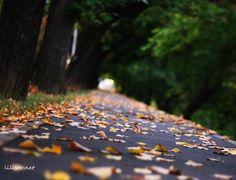 alee pustie acoperita de frunze aurii Romania
