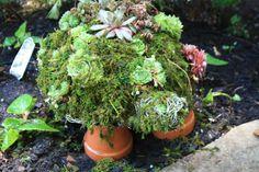 Succulent Turtle Front