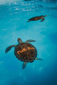 Florida Keys Road Trip | 5-Day Travel Guide - Dana Berez Key West Resorts, Key West Vacations, Florida Travel, Florida Keys, West Road, Boat Tours, South Beach, Beach Resorts, Beach Day
