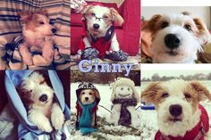The 50 Cutest Instagram Accounts In The WholeWorld