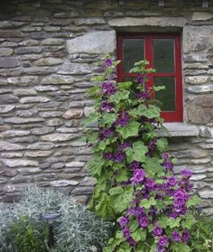 cottage windows - Google Search