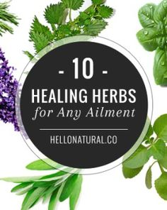 10 Healing Herbs for Any Ailment Natural Headache Remedies, Herbal Remedies, Plants That Repel Bugs, Oregano Oil Benefits, Winter Crops, Bountiful Harvest, Healthy Herbs, Plant Information, Organic Vegetables