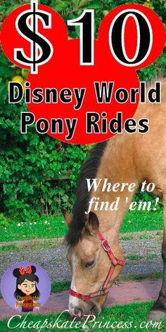 Disney World 4 Le$$: where to find Pony Rides Under $10 for kids | plan a better Disney trip | how to save money on a Disney Vacation #disney #disneyworld #ponyrides #disneyresorts