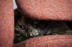 Peek-a-Boo IV