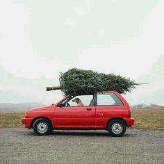real christmas tree a top car