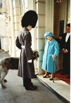 Irish Guards Mascots 2000 to present day Queens Guard, Irish Wolfhound, Present Day, Canada Goose Jackets, Fur Coat, British, Winter Jackets, London, Ideas