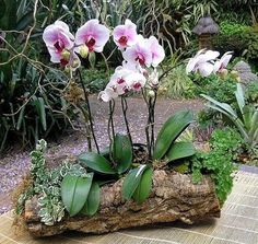 How To Keep Orchids Alive And Looking Gorgeous Growing Orchids, House Plants, Garden Deco, Orchid Centerpieces, Plants, Small Gardens, Artificial Plants, Orchids, Plant Decor