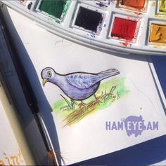 Watercolor Pigeon - Illustrated by Heather Martinez / HamEyeAm