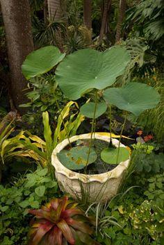 paradis express: The exotic garden blog