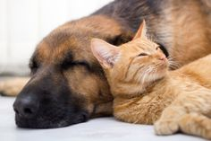 Adoption Is the Best Option: Why You Should Adopt Rescue Pets - Bettina Introducing Dog To Cat, Jackson Galaxy, Litter Box, Cat Food, Cool Cats, Dog Pictures, Graphic Illustration, Animal Rescue, Pet Adoption