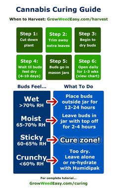 How to cure marijuana overview - cheat sheet