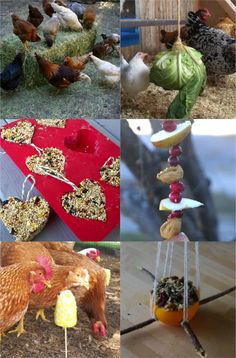 Chicken Coop - - Ways to entertain chickens when theyre cooped up in the winter. Building a chicken coop does not have to be tricky nor does it have to set you back a ton of scratch. Backyard Chicken Coop Plans, Building A Chicken Coop, Diy Chicken Coop, Chickens Backyard, Chicken Barn, Chicken Coop Pallets, Chicken Coop Winter, Chicken Feeders, Backyard Farming