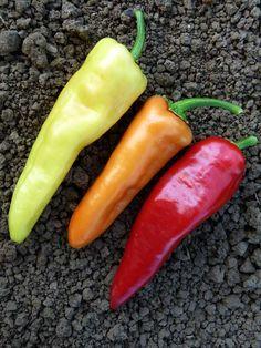 Sweet Banana Pepper - Heirloom Seeds, Vegetable Seeds - Sustainable Seed Co.