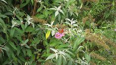 belevenispad-vlinder-160921