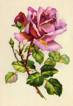 ✿Fragrant Scent Of Roses✿ purple rose