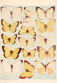 Bio Diversity - butterflies