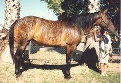 Brindle horse markings are rare, but very pretty