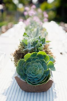 Décoration de mariage : les succulentes... - La Mariée en Colère Blog Mariage, grossesse, voyage de noces