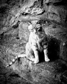 """L'idéal du calme est dans un chat assis"" Jules Renard #cat #cats #catsagram #chat #instagood #kitten #kitty #kittens #pet #pets #animal #animals #petstagram #petsagram #photooftheday #catsofinstagram #ilovemycat #instagramcats #love #catoftheday #lovecats #red #lovekittens #adorable #catlover #instacat"