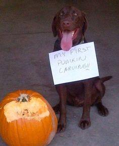 Hilarious Dog Shame Pumpkin Carving