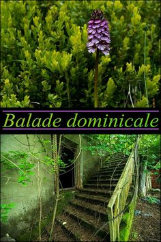 Balade dominicale.