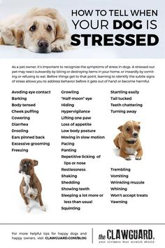 Dog Mom Discover Is My Dog Stressed? Is your dog stressed out? Here are the symptoms of anxiety in dogs. Some of them may surprise you! Dog Separation Anxiety, Dog Anxiety, Dogs With Anxiety, Puppy Care, Pet Care, Dog Stress, Dog Body Language, Dog Health Tips, Pet Health