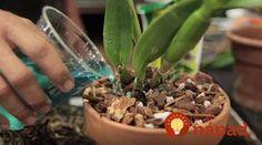 Moja žena týmto zázrakom hnojí orchidei a má ich nádherné, žiadna pleseň, ani škodcovia nehrozia. Diy And Crafts, Flora, Remedies, Food And Drink, Gardening, Plants, Orchids, Garten, Lawn And Garden