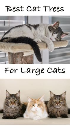 Best Cat Perches For Large Cats - cat kitty dog and other animals - Katzen Fun Facts About Cats, Cat Facts, Cool Cat Trees, Cool Cats, Cats Best, Cat Site, Buy A Kitten, Chesire Cat, Cat Perch