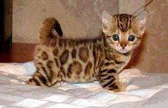 OMG! What a cutie!