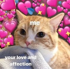 Image about love in reactions & memes by 𝐌𝐞𝐭𝐭𝐞 𝐱 Cute Cat Memes, Cute Love Memes, Funny Cute, Funny Memes, Heart Meme, Crush Memes, Relationship Memes, Wholesome Memes, Animal Memes