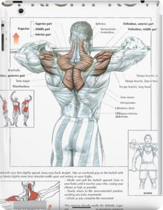 Gym Workout Tips, Strength Training Workouts, Workout Fitness, Activ Fitness, Shoulder Mass Workout, Muscle Anatomy, Muscle Building Workouts, Chest Workouts, Back Muscles