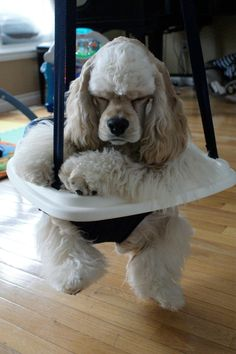 Dogs Caught In Awkward Places:  Swing Time  He looks terrified.  Photo credit: hosted by Imgur