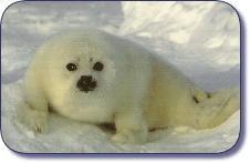 Stop seal hunting.