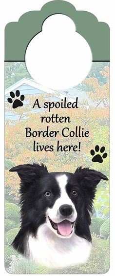 Border Collie Wood Sign 'A Spoiled Rotten Border Collie Lives Here'with Artistic Photograph Measuring 10 by 4 Inches Can Be Hung On Doorknobs Or Anywhere In Home -- Don't get left behind, see this great cat product : Cat Doors, Steps, Nets and Perches