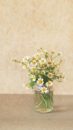 Pure Simple Daisy Flower Water Glass Vase iPhone 8 Wallpapers