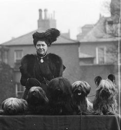 Lady Aberdeen and her Yorkies
