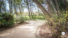 Digital Product Thumbnail - Alley in a Public Park with Green Bushes and Flowers in Spring Spring Pictures, Spring Photography, Travel Images, Green Trees, Public, Country Roads, Park, Digital, Flowers