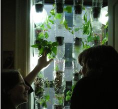 Window Farms.  #hrdroponics