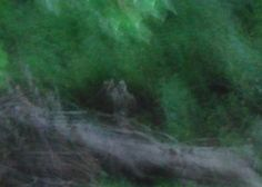 """The photographer of this image reported, """" Captured this ghostly, semi-transparent civil war spirit recently while taking random pics. Used a Sony Cybershot, taken early morning in July. The freaky thing is, its nowhere near any Civil War Battlefield. Maybe the spirits came home with me from Gettysburg...?"""""""