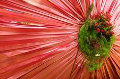 . Plants, Flora, Plant
