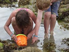 Hunting in rock pool for scary creatures Single Mum, Cumbria, Lake District, Beach Fun, Brittany, Scary, Hunting, Creatures, Rock