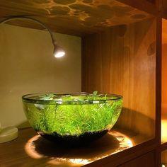 LFS Reptile Tortoise Water Dish Bowl Terrarium Feeding Bowl 3 PCS