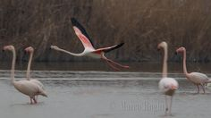 Pink Take-Off by Marco Roghi on 500px