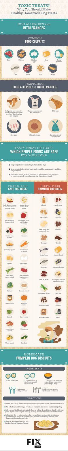 Why You Should Make Healthy Homemade Dog Treats #Infographic #Animals #Dogs…