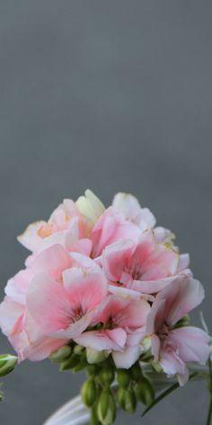 35 besten sommerflor blumen und pflanzen welche im sommer bl hen und die g rten versch nern. Black Bedroom Furniture Sets. Home Design Ideas