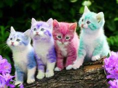 kleurrijke katjes - Google zoeken